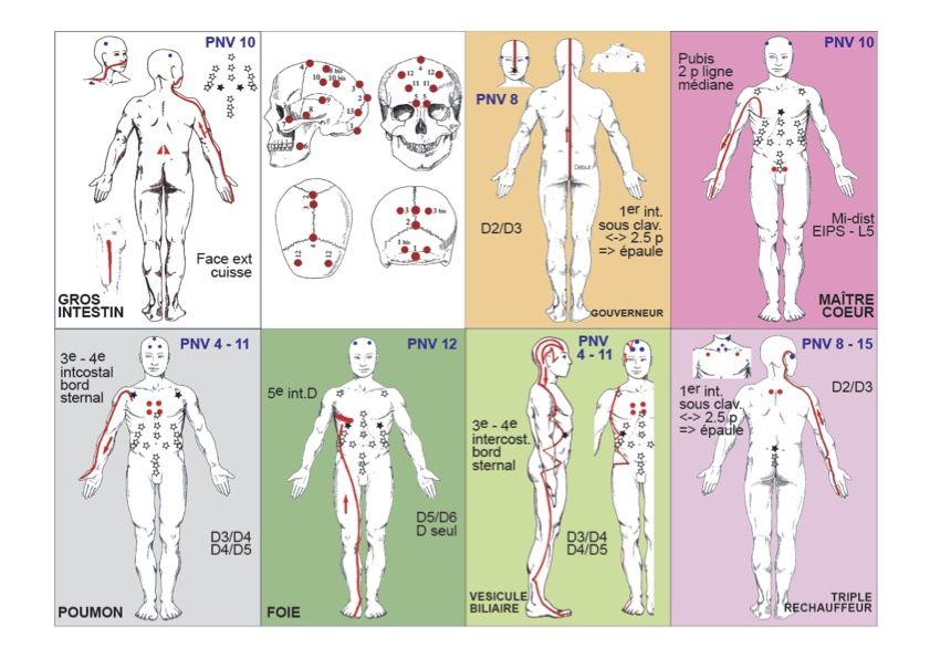 trajets des méridiens d'acupuncture utilisés en kinésiologie